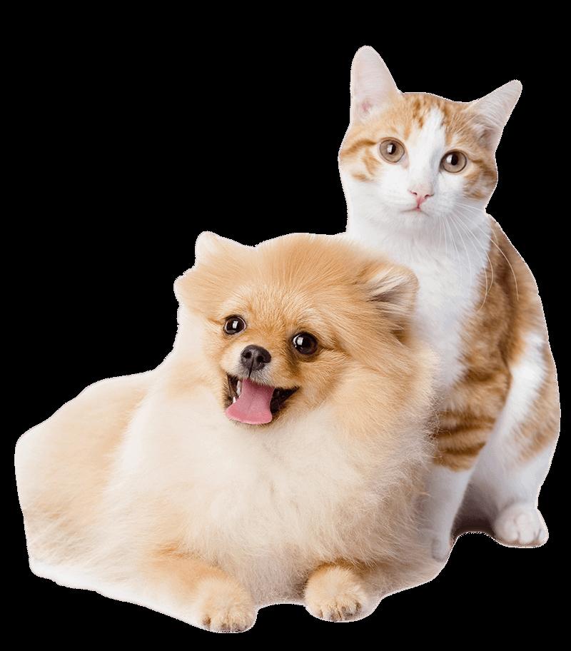 Стерилизация кошек собак