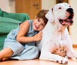 Ветеринар на дом Минск
